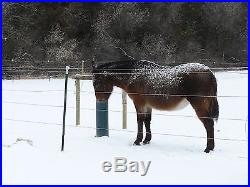 Horse, Cattle Waterer THE WATERING POST, Frost Proof, Simple, Sanitary! 78 inch