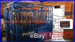 Livestock Squeeze Chute Scale Cattle Hogs Sheep Goats Pigs Stainlesshead Remote